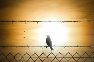 Bird sitting on barbed wire fence looking into sunlight.